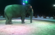 Calls for animal circus ban after protesters left bloody at demo