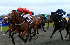 One Irish company's technology is helping create the perfect racehorse