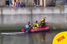 Watch Casper the cat get rescued from the Liffey by the Dublin Fire Brigade