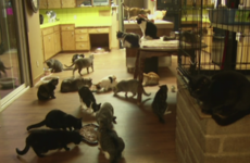 California woman lets thousands of homeless cats take over her house