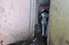 Cork man fined after Huskies were found covered in faeces with no access to food