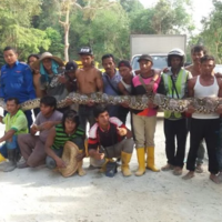 'World's longest snake' dies after capture on tourist island