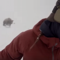 The terrifying moment a snowboarder is unknowingly chased down the slope by a bear