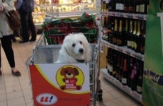 This supermarket has transformed its trolleys to let dogs sit up front