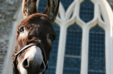 It's Friday so here's a slideshow of donkeys from around the world