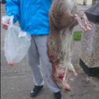Residents of a Dublin estate say they're plagued by 'giant' rats