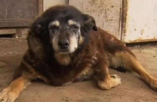 The 'world's oldest dog' has died aged 30