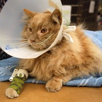 Cat who was lost in JFK airport dies weeks after being found