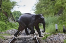 Seven elephants killed by train in India