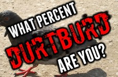 What Percent Durtburd Are You?