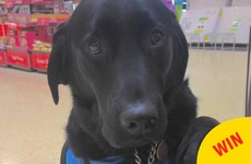 A Maynooth waiter's kind gesture to this child with autism and his assistance dog is just lovely