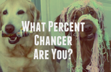 What Percent Chancer Are You?