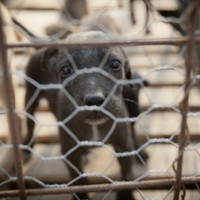 Bill paves way for government to enact puppy farm law