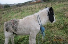 ISPCA rescues pony after it was set on fire