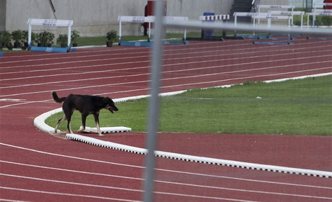 A dog strays into the athletes practice area of the Commonwealth Games village