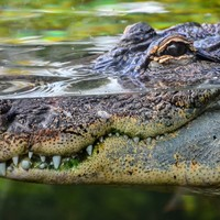 Woman dragged away by crocodile in Australia was celebrating friend's cancer treatment