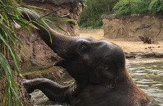 The elephants at Dublin Zoo have been cooling off in the most adorable way