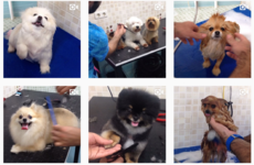 This soothing pet grooming Instagram account is a must for any dog enthusiast
