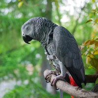 Parents believe a parrot witnessed their son's murder and should be used as evidence in the US