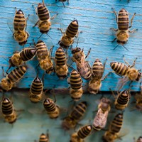 Leaving Cert students stung with bee breeding question, as everyday finances go overlooked