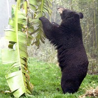 Four people killed in bear attacks in northern Japan