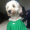 9 adorable Irish dogs backing the Boys in Green