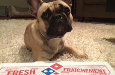 13 signs your Domino's addiction has gone too far