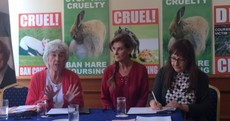 'This is not a sport, it's just cruelty': Irish TV and music stars support ban on hare coursing