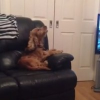 The Angelus on RTE is actually an amazing singalong for dogs