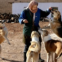 Iran authorities confiscate dogs in crackdown on 'vulgar Western culture'