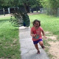 This little girl getting chased by a peacock at the zoo has turned into a gas meme