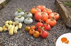 Carve out a space in your garden for pumpkin