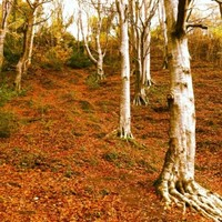 Gallery: Living colour - your photos of Ireland in the autumn