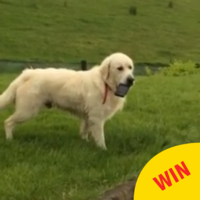 The boldest dog in Ireland stole a phone, with hilarious results