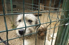 Dog owners surrendering pets to pounds to avoid paying for holiday kennels
