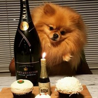 The Rich Dogs of London lead better lives than most humans