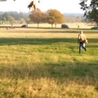 Video of man chasing after his dog goes viral and sparks YouTube spin-offs