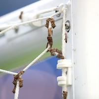 Moths invade Stade de France before Euro 2016 final
