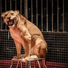 Government says it has no plans to ban the use of animals in circuses