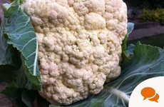 For the love of cauliflower: A difficult veg to grow but it's worth it