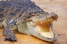 Man fights off crocodile with bare hands