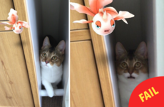 Some people are convinced that their pets can see Pokémon in real life