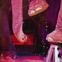 Dublin City Council backs ban on animal circuses