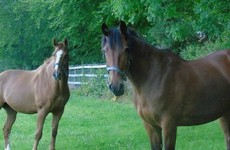 Gardaí investigating after horses are attacked with axe in Wicklow