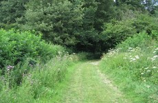 Don't forget there's a ban on hedge cutting - and you could be prosecuted for it