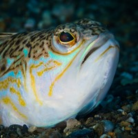 Warning to swimmers over venomous fish that lurks beneath the sand