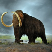 New study finds last woolly mammoths died of thirst