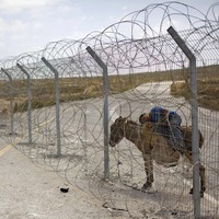 Palestinians are outraged at a donkey sale planned by the Israeli army