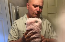 A girl gave her Dad her fluffy pink phone case, and he took the most Dad selfies ever