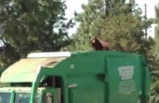 Bear hitches a ride atop a rubbish truck in New Mexico